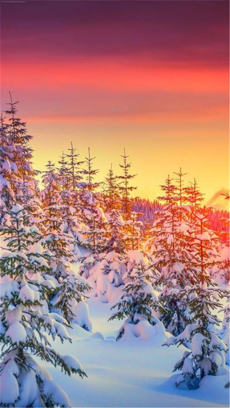 High Quality And Breath Taking Christmas Winter Wallpaper - Hackmatack - HD Wallpaper