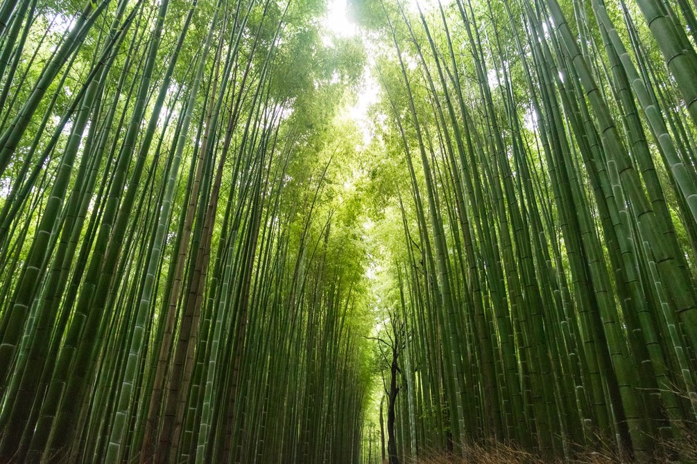 Wall Mural Bamboo, Tree And Vegetation - Chinese Bamboo Tree Motivation - HD Wallpaper