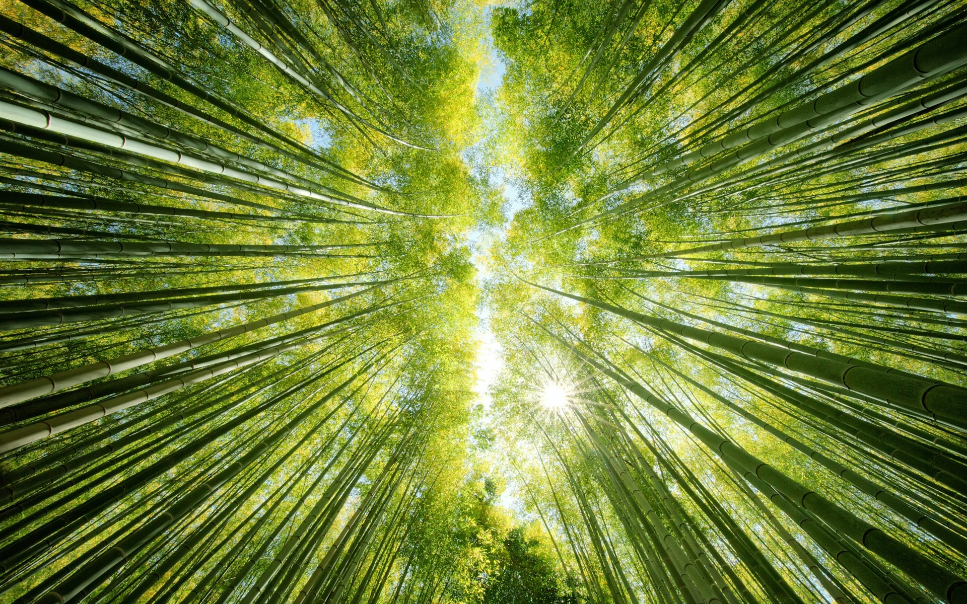 Wallpaper Bamboo Forest, Green, Sun Rays, From Bottom - Bamboo Forest Wallpaper Iphone - HD Wallpaper