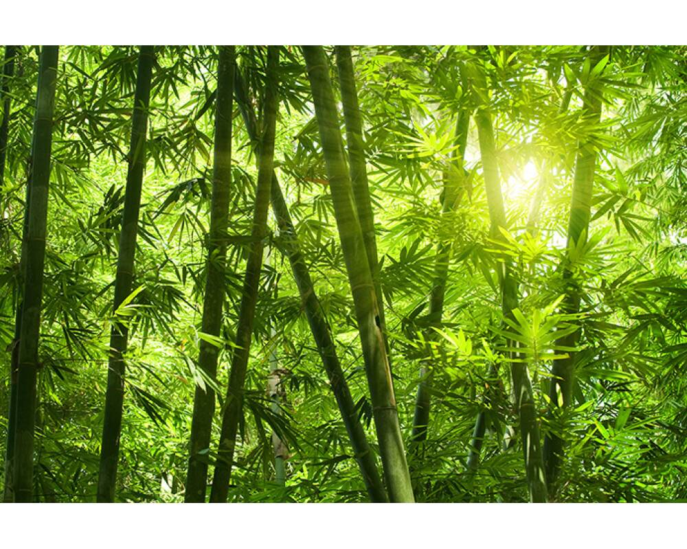 Livingwalls Photo Wallpaper Bamboo Forest M - Bamboo Forest Plants - HD Wallpaper