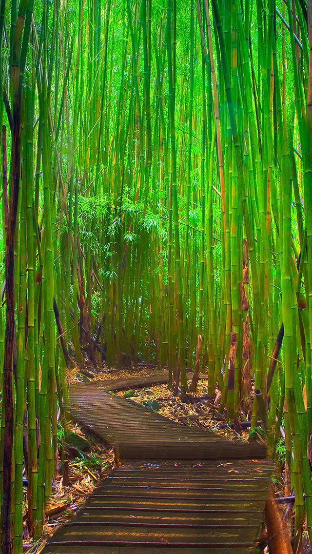 Bamboo Forest Iphone Wallpaper - Bamboo Forest Wallpaper Iphone - HD Wallpaper