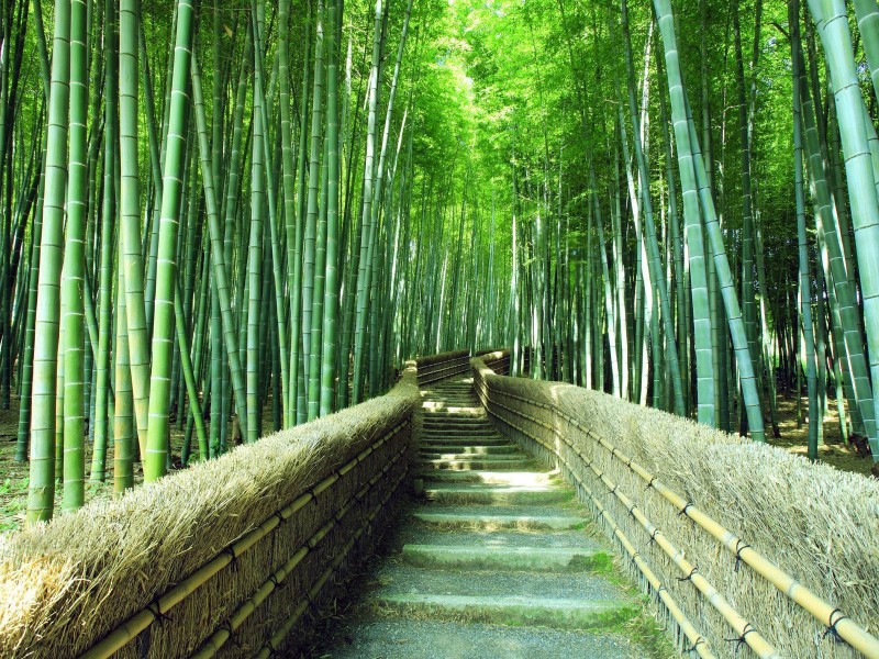 3 Wallpaper, Trail In A Bamboo Forest - Footpaths Windows Theme - HD Wallpaper