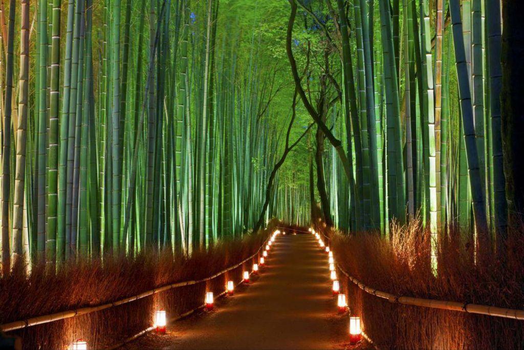 Arashiyama Bamboo Forest Night - HD Wallpaper