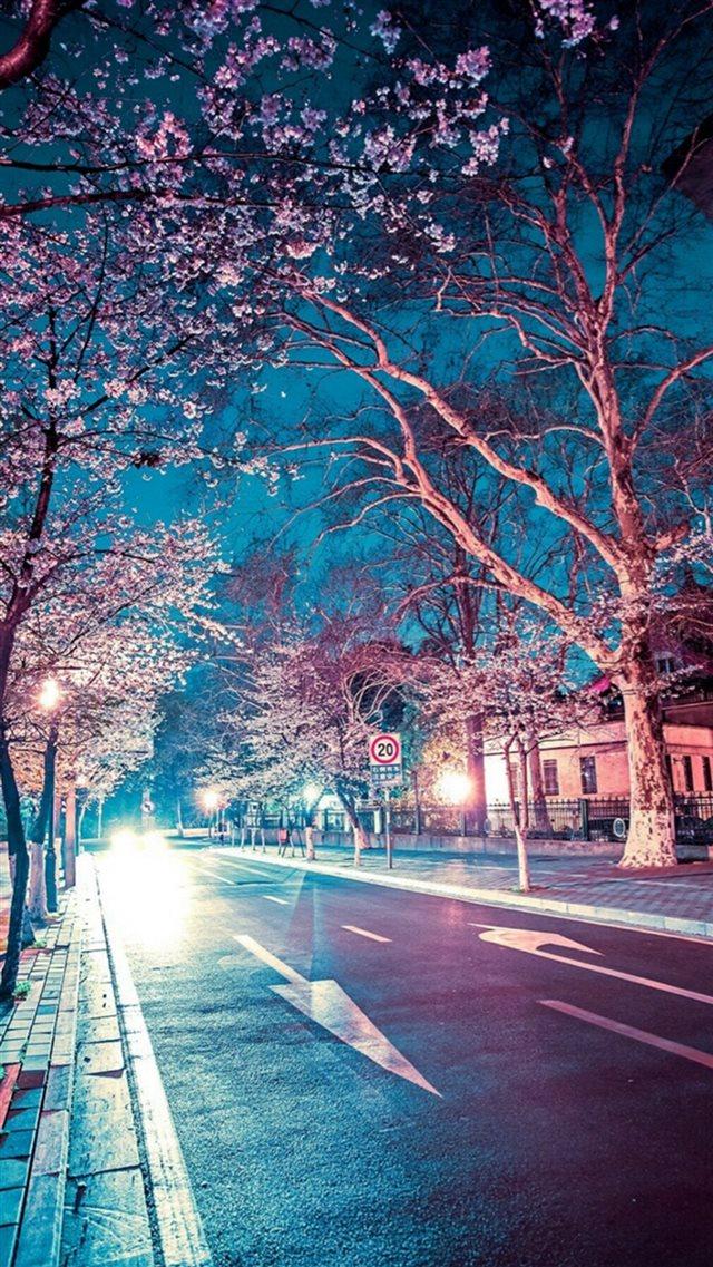 227 2272291 japanese street cherry blossom night scenery iphone japan