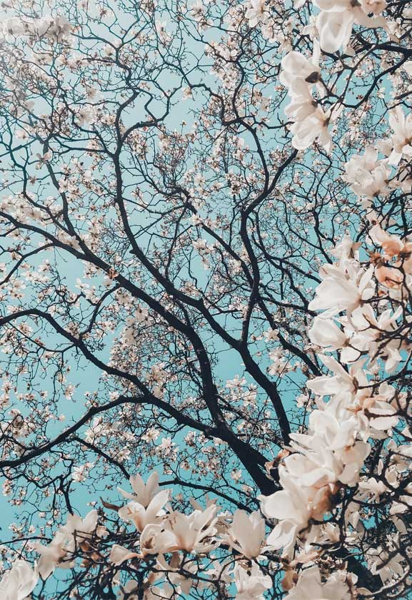 42 Pretty Blossom Iphone Wallpapers, Iphone Wallpapers, - Aesthetic Cherry Blossom Iphone - HD Wallpaper