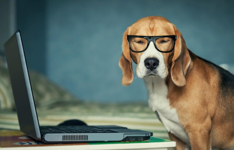 Wallpaper For Laptop Dogs