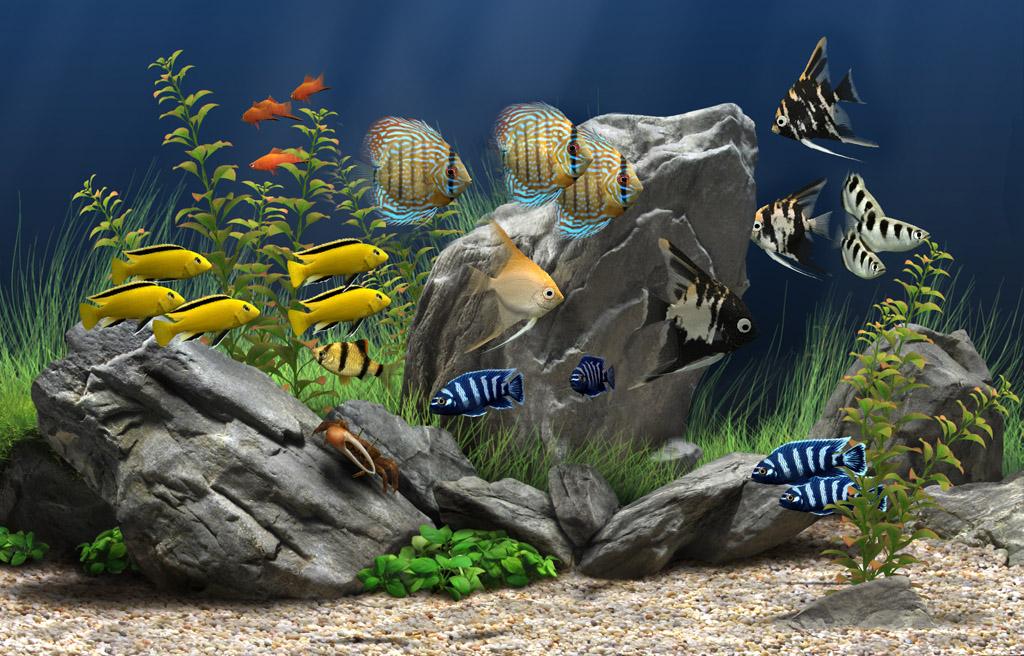 Dream Aquarium - HD Wallpaper