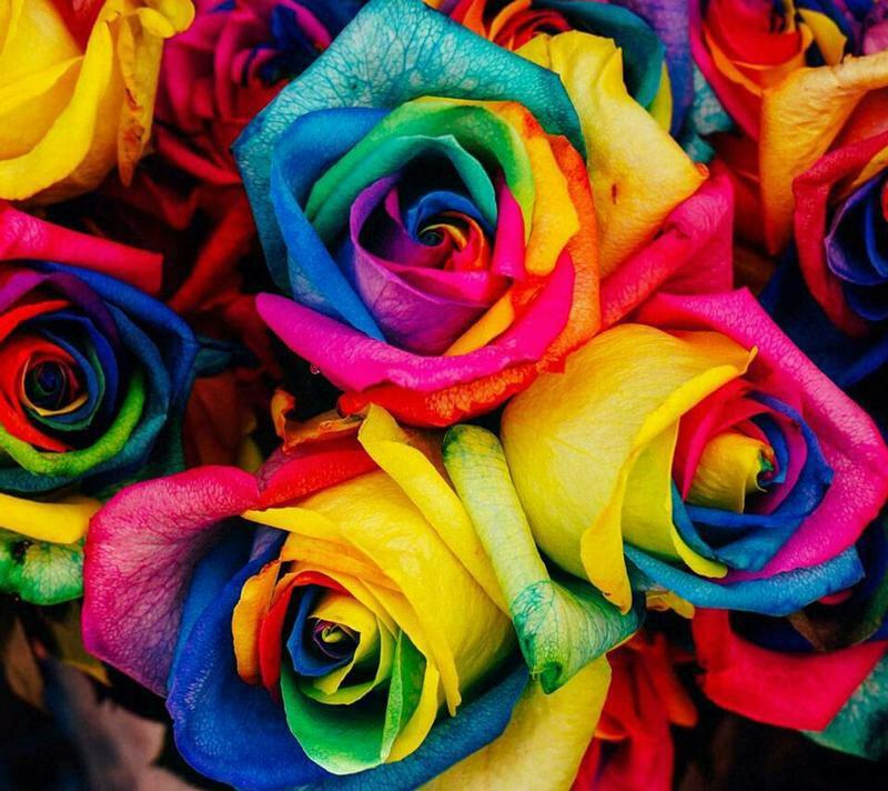 Wallpapers, Flores, Colores En Flores - Multitude Of Colors - HD Wallpaper