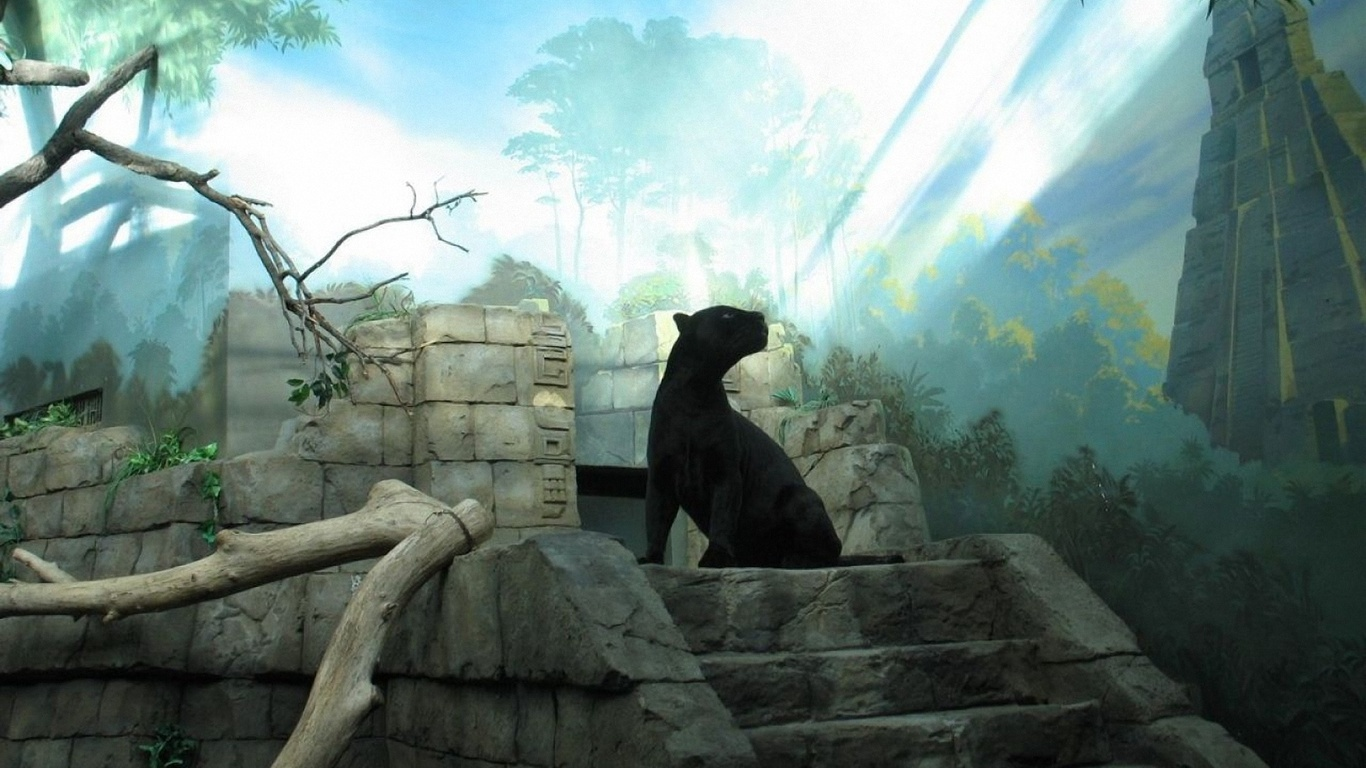 Anime Fantasy Ruins Animals Large On The Pictures D Black Panther Wallpaper Jungle 1366x768 Wallpaper Teahub Io