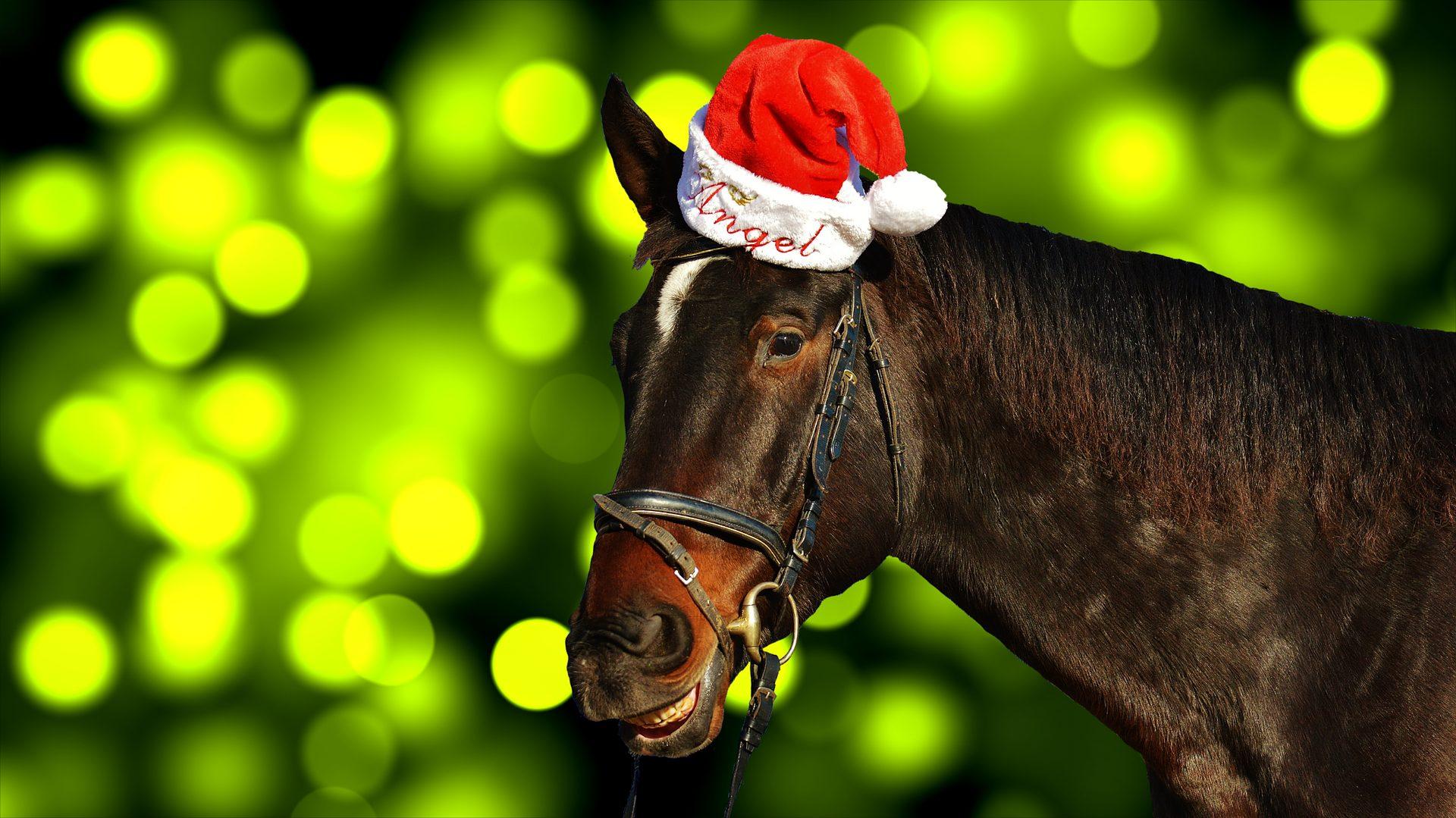 Cute Christmas Horse Wallpaper With Santa Cap Free Horse With Santa Hat 1920x1079 Wallpaper Teahub Io