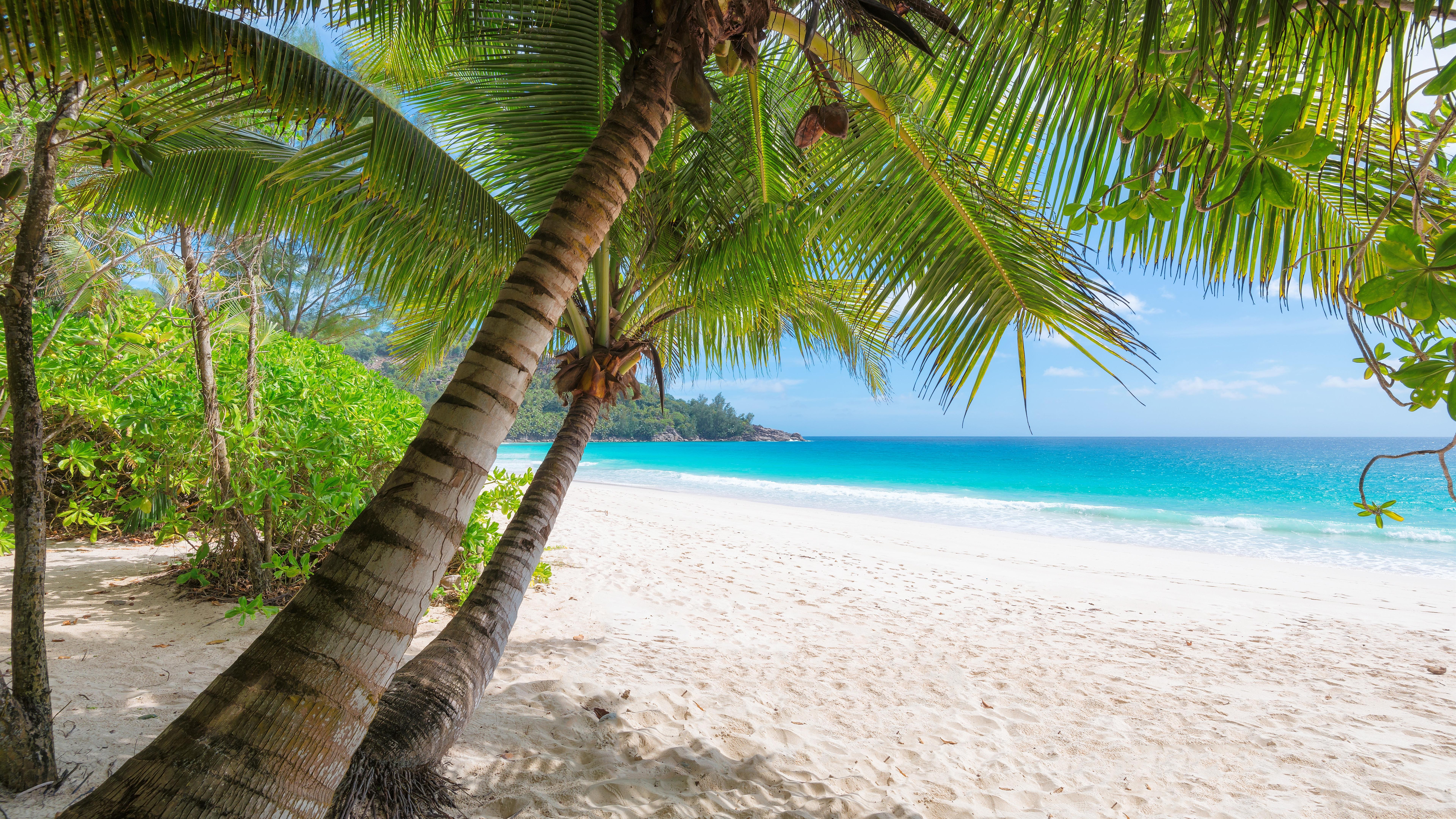 Wallpaper Palm Trees, Beach, Sea, Tropical, Summer - Palm Tree Trunk Beach - HD Wallpaper