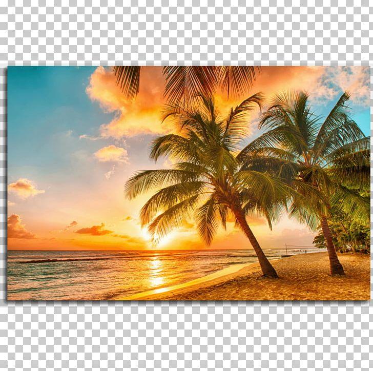 Caribbean Beach Shore Praia Da Adraga Travel Png, Clipart, - Palm Tree Beach Sunset - HD Wallpaper
