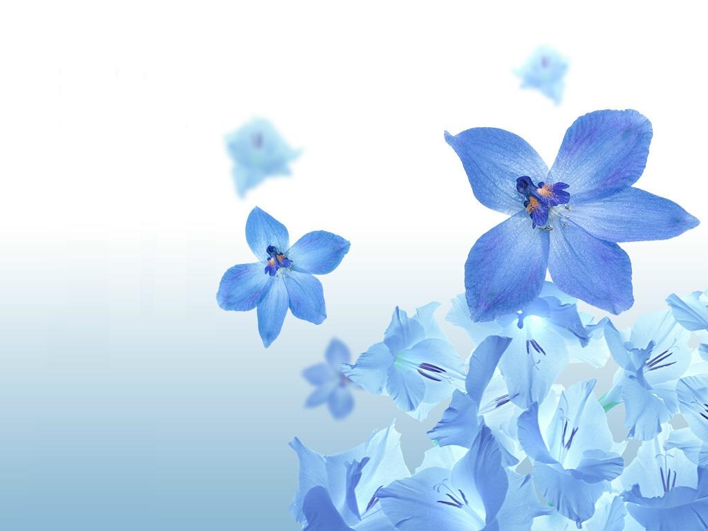 Blue Flower Anime Background   20x20 Wallpaper   teahub.io