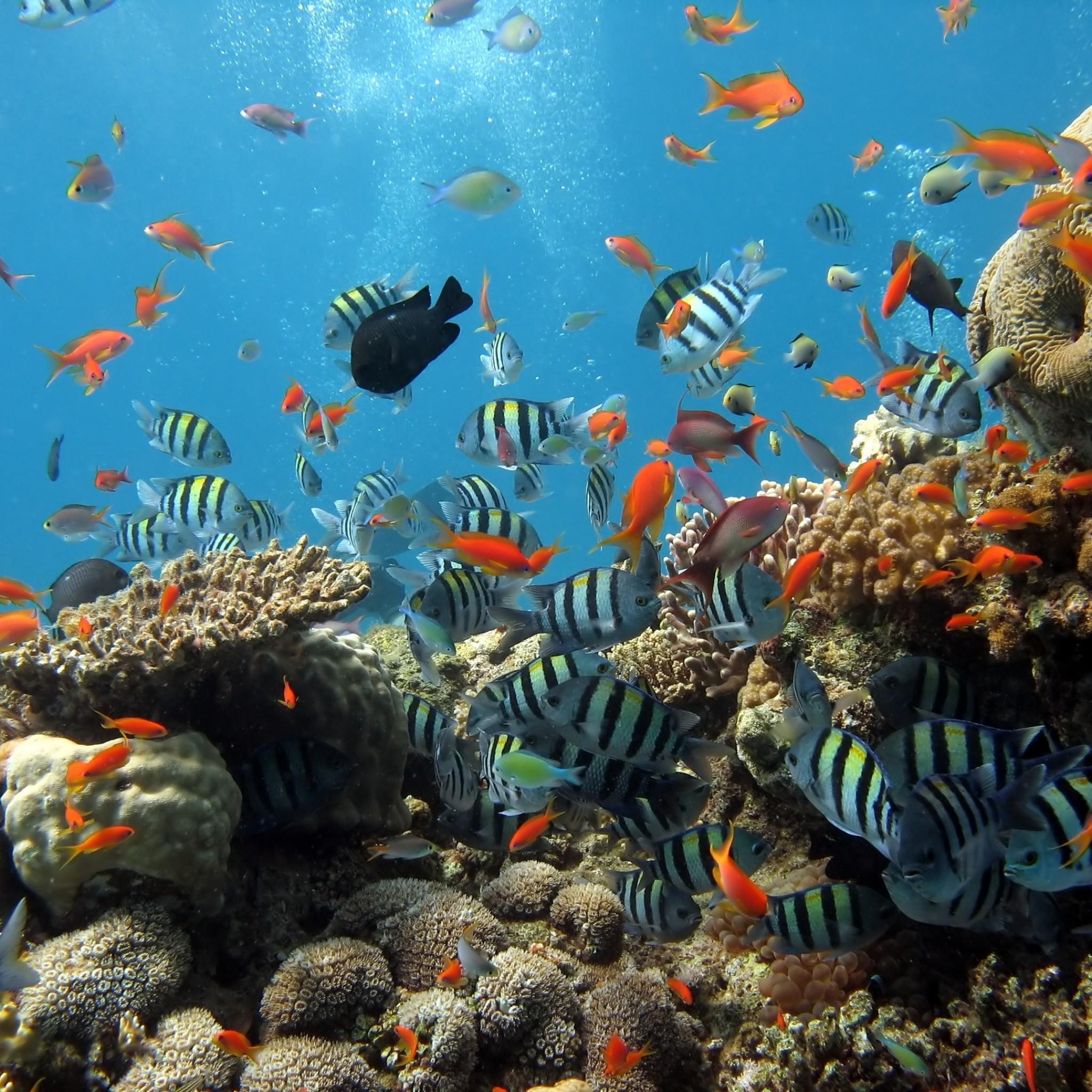 Wallpaper Underwater Ocean Fish Data Src Underwater Ocean Wallpaper Iphone 2048x2048 Wallpaper Teahub Io