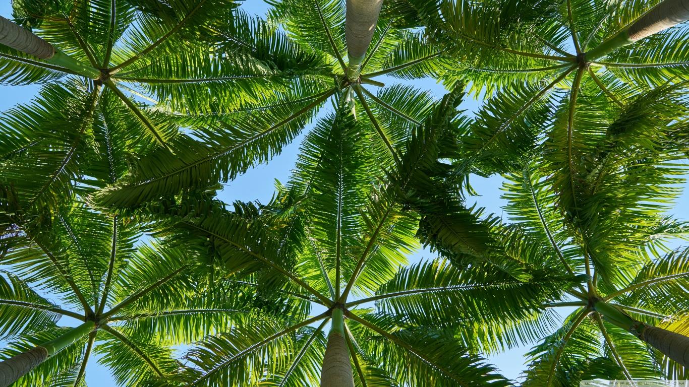 Palm Tree Pic Hd - HD Wallpaper