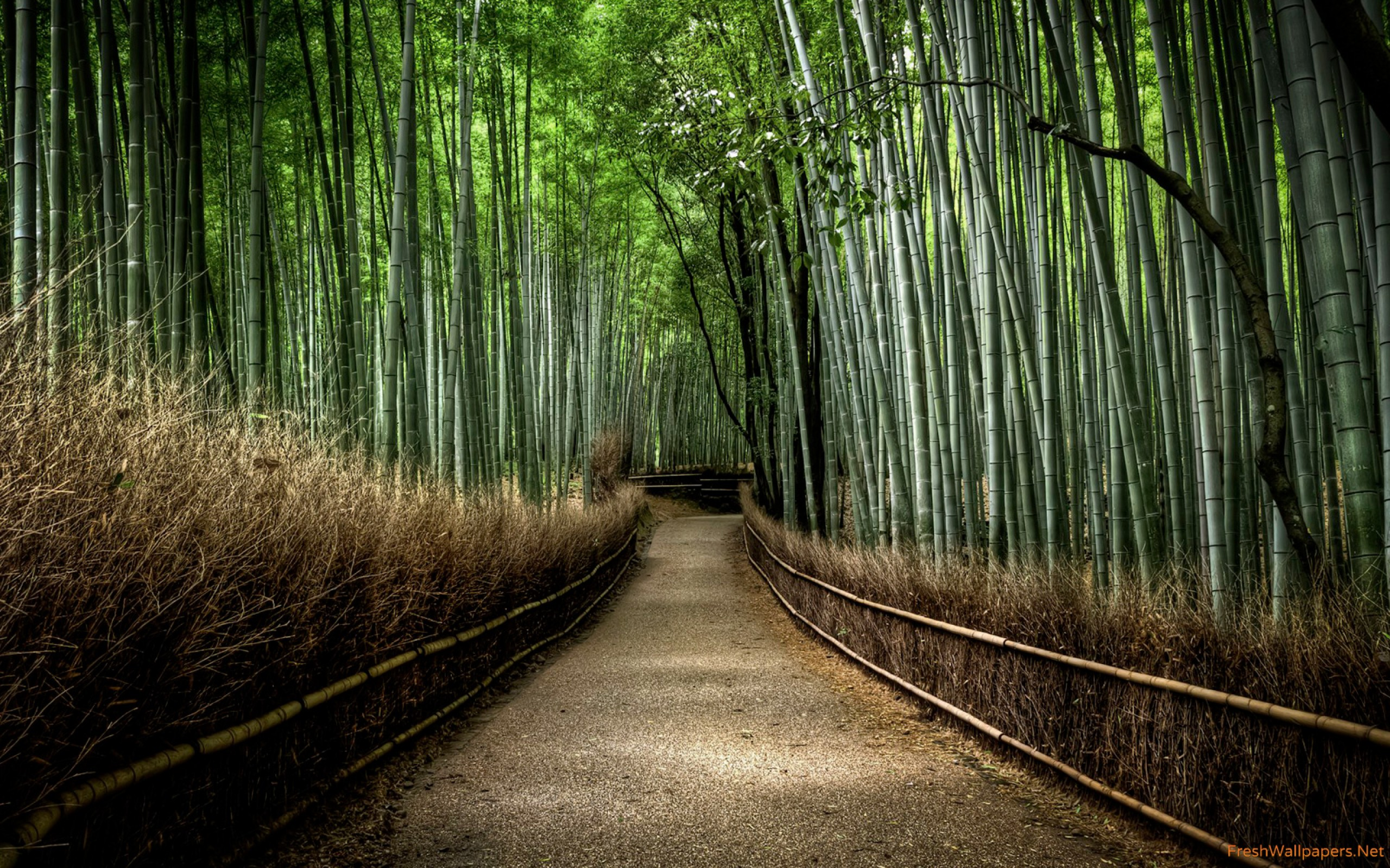 Japanese Bamboo Forest - HD Wallpaper