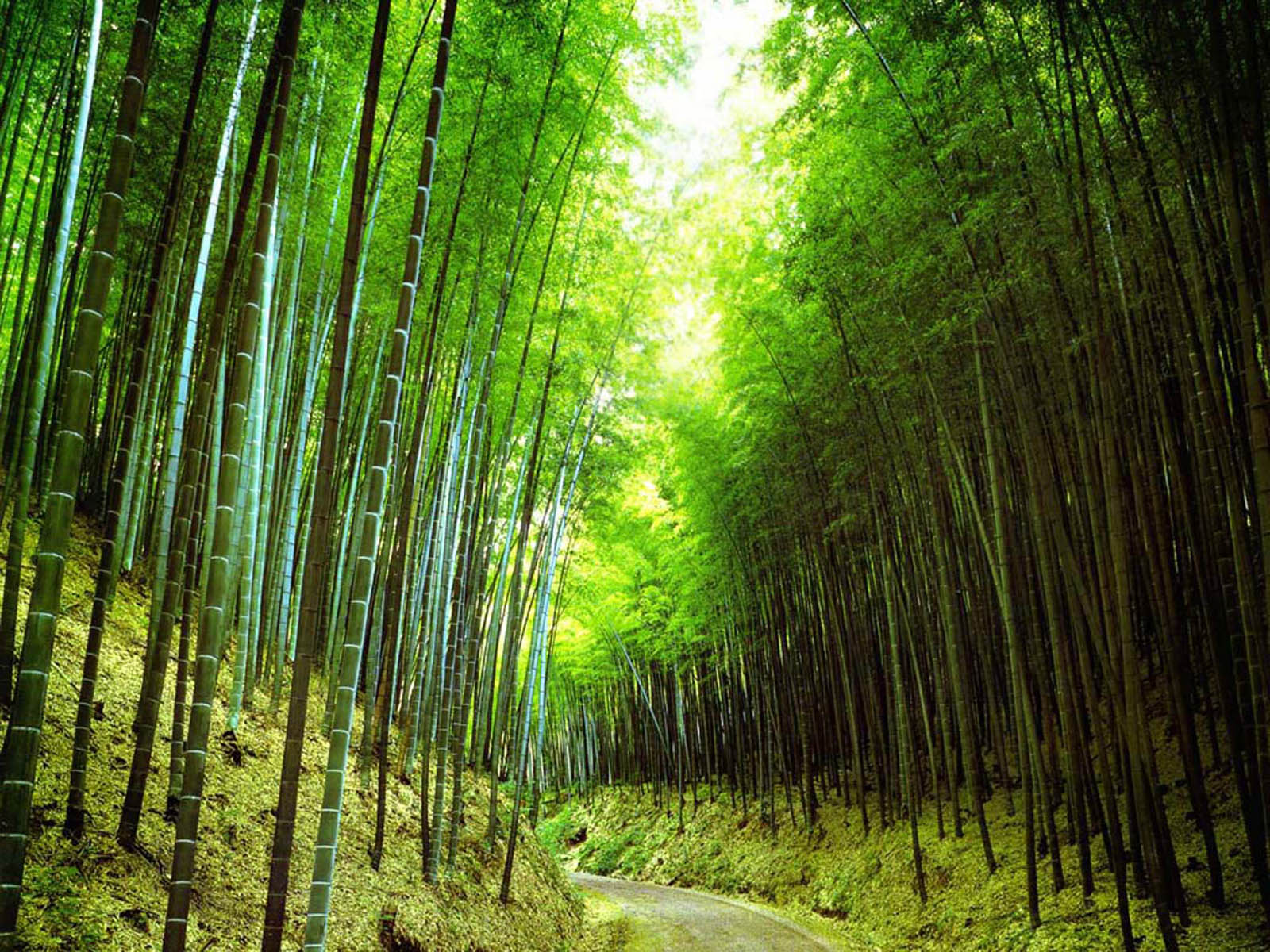 Background Bamboo Forest 3d - HD Wallpaper