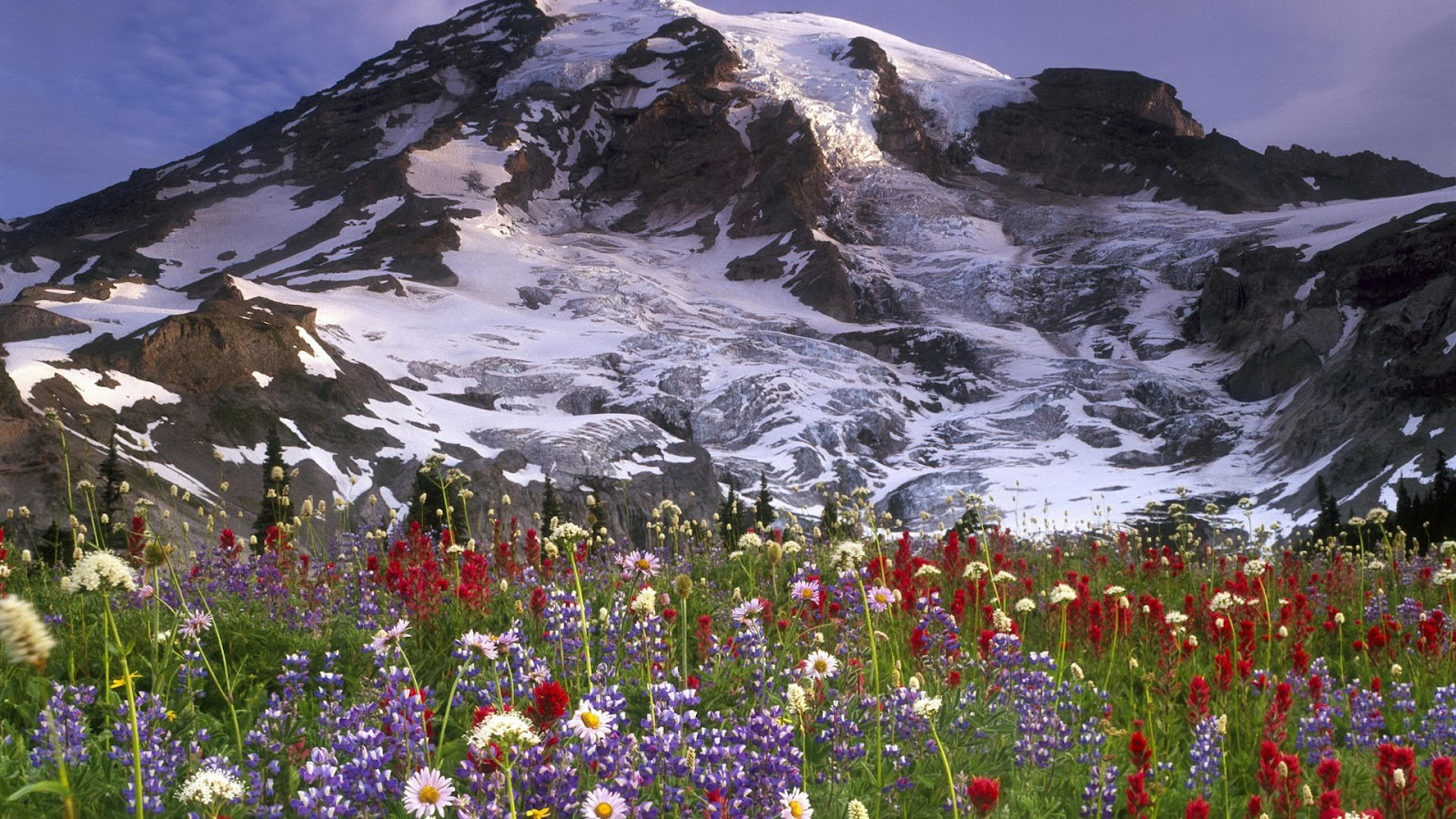 Flowers Ice Mountains Full Hd Nature Background Wallpaper - Laptop Wallpaper Hd Flowers - HD Wallpaper