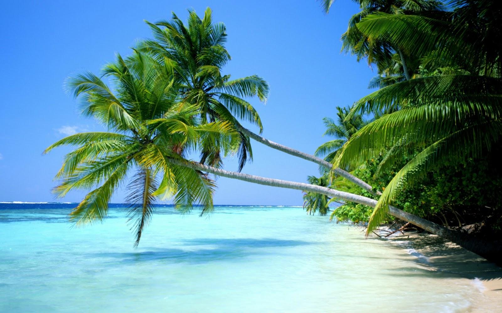 Desktop Wallpapers Nature - Tropical Beach Desktop - HD Wallpaper