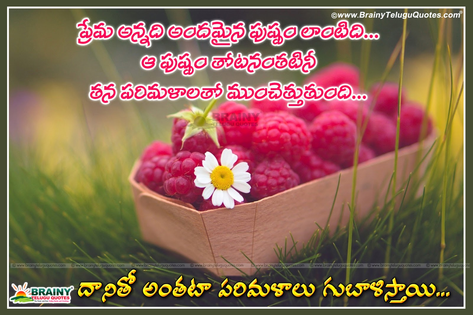 Here Is Telugu Best Romantic Love Proposals Quotes, - Good Morning Raspberry - HD Wallpaper