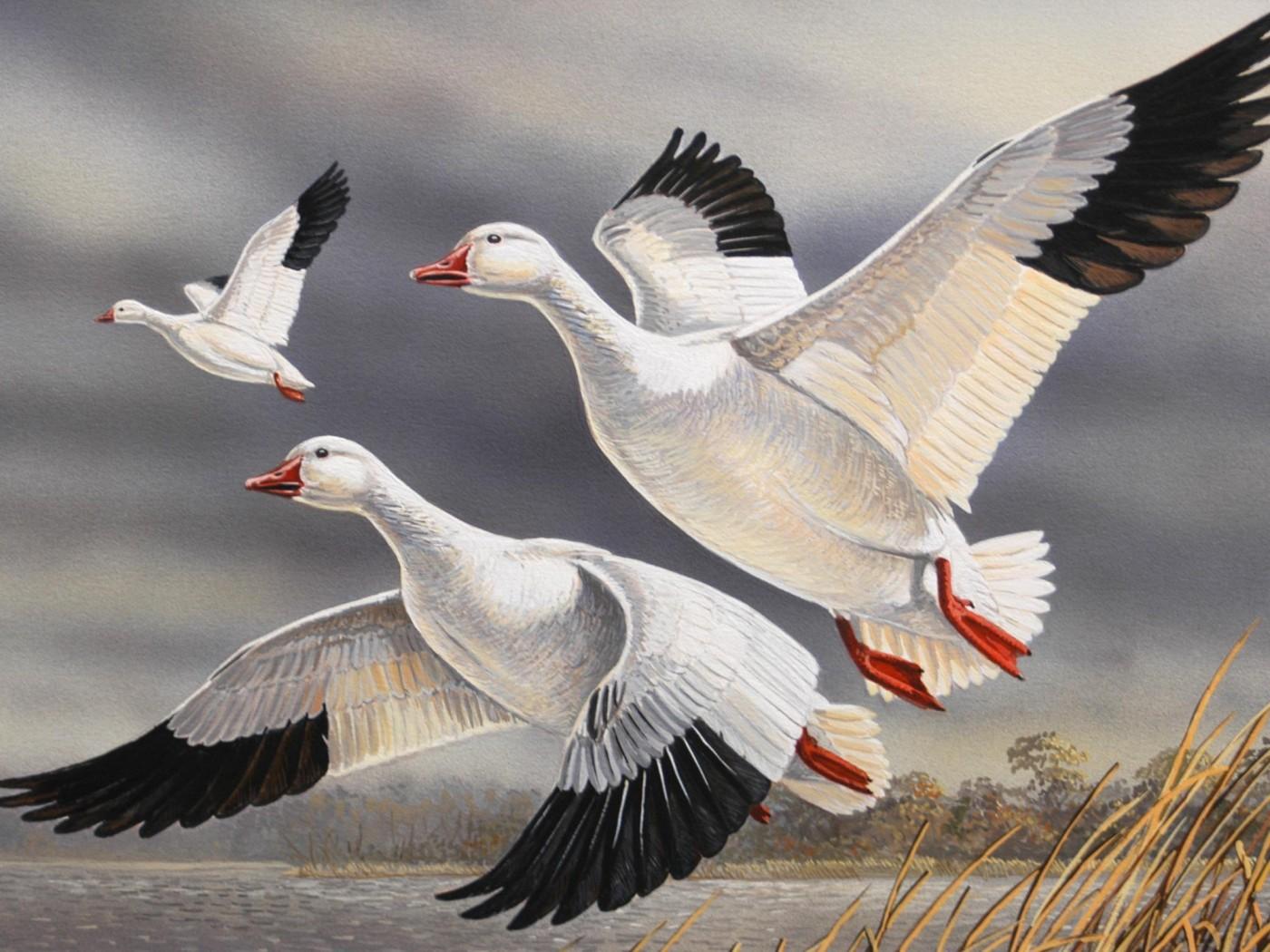 Beautiful Flying Bird Painting - HD Wallpaper