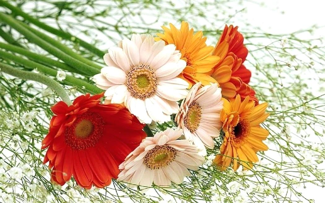 New Wallpaper Flowers Download Cute And Beautiful Flowers Flower Art 1050x657 Wallpaper Teahub Io