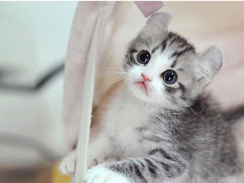 50 Gambar Dp Bbm Kucing Lucu Imut Gemesin Berbagai Catty Cute 800x600 Wallpaper Teahub Io