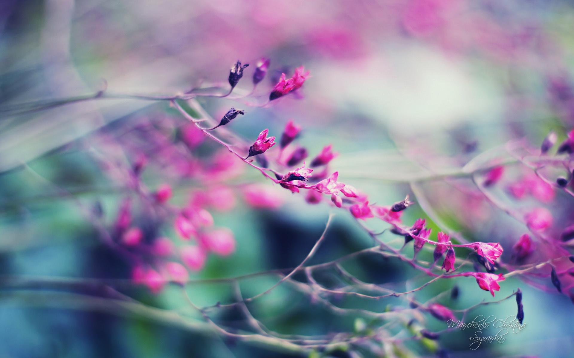 Fondos De Pantalla Hermosos Jardines, Flores Moradas - Photography Nature Depth Of Field - HD Wallpaper