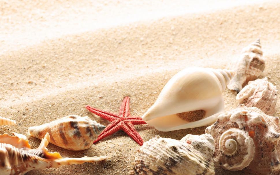 Sand Seashells Background Wallpaper,beach Wallpaper,desert - Summer Desktop Backgrounds Hd - HD Wallpaper