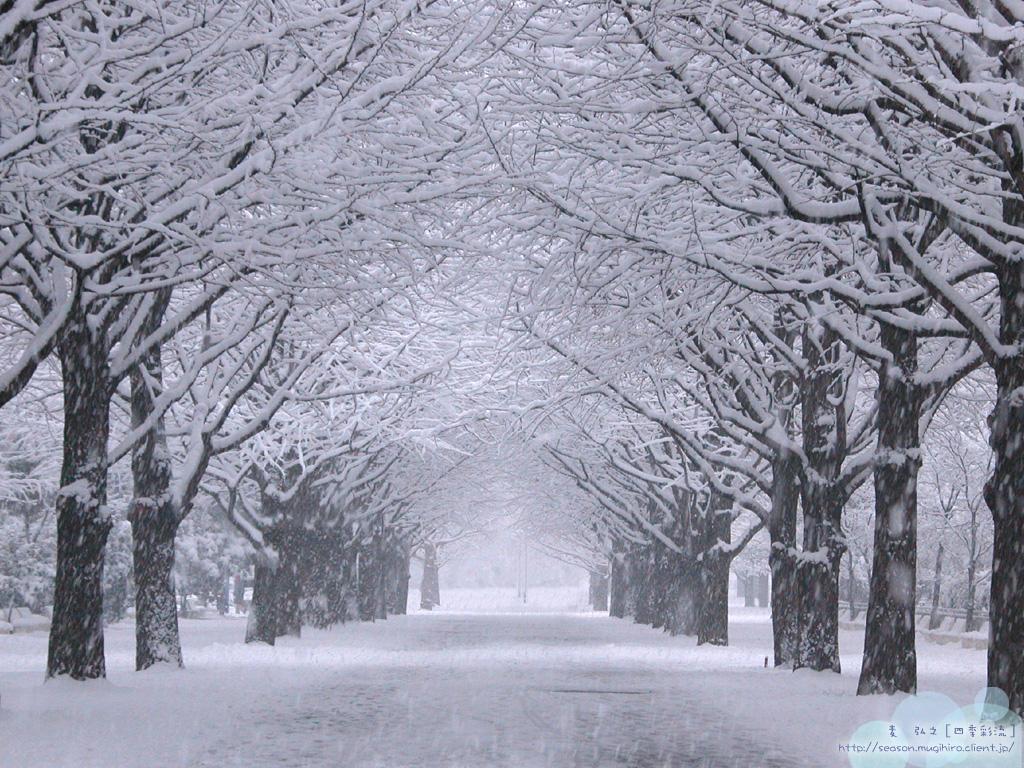 Wallpaper Musim Salju Musim Salju Di Jepang 1024x768 Wallpaper Teahub Io