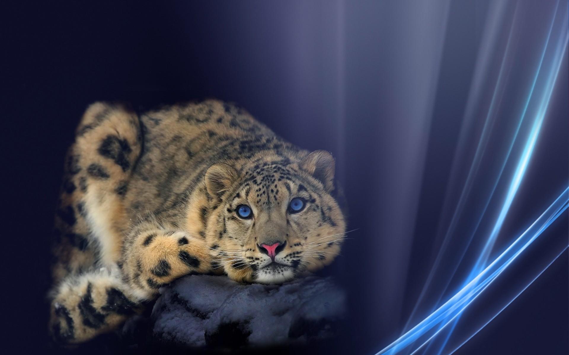 Wallpaper - Leopard Lion With Horns Fantasy - HD Wallpaper