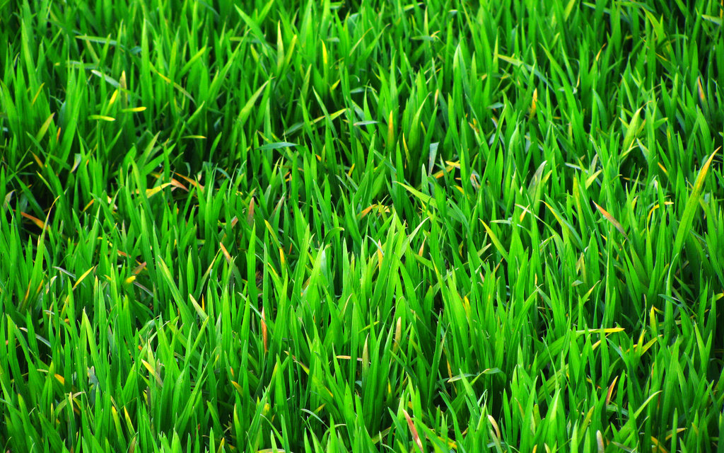 hdq beautiful grass images wallpapers green grass wallpaper 4k free download 1024x640 wallpaper teahub io green grass wallpaper 4k free download