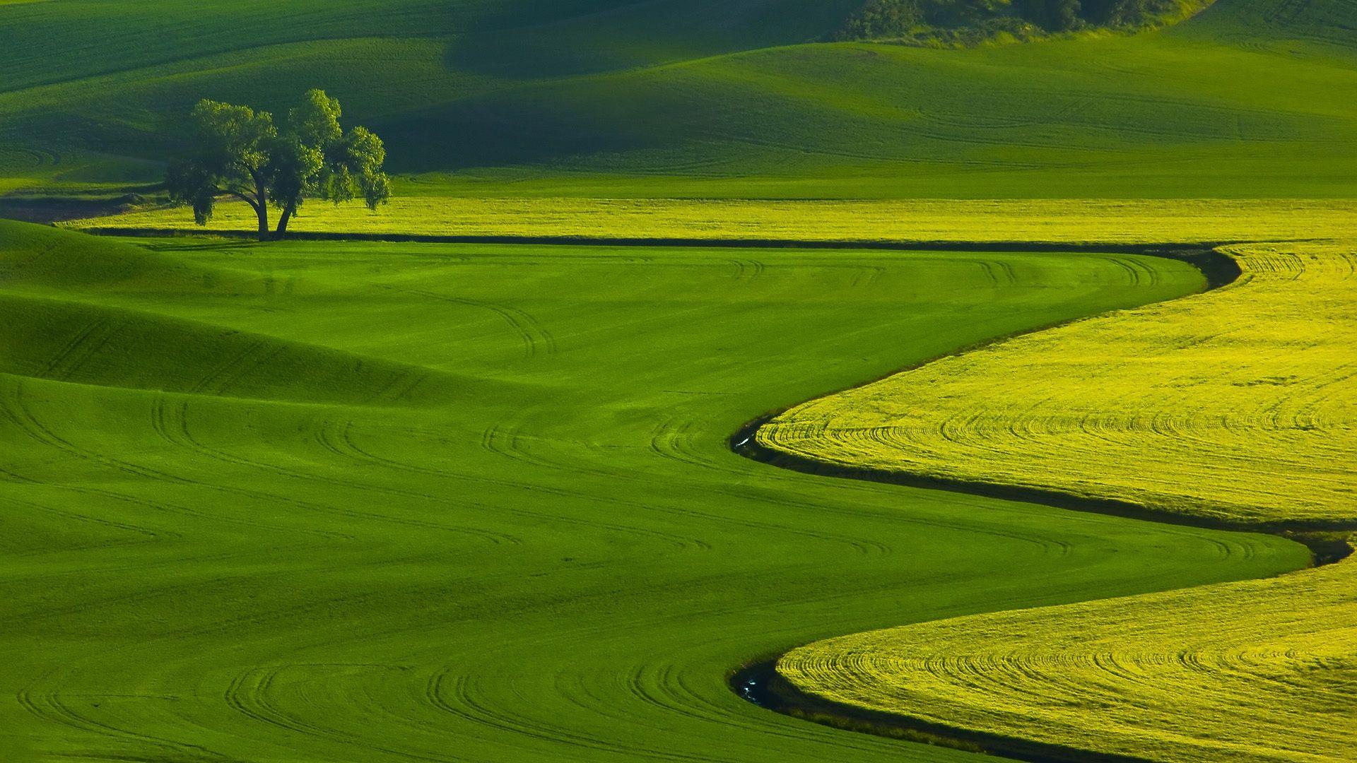 Green Desktop Wallpaper Nature - HD Wallpaper
