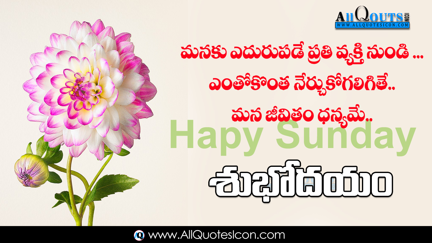 Telugu Good Morning Quotes Wishes For Whatsapp Life - Beautiful Good Night Images With Flowers - HD Wallpaper
