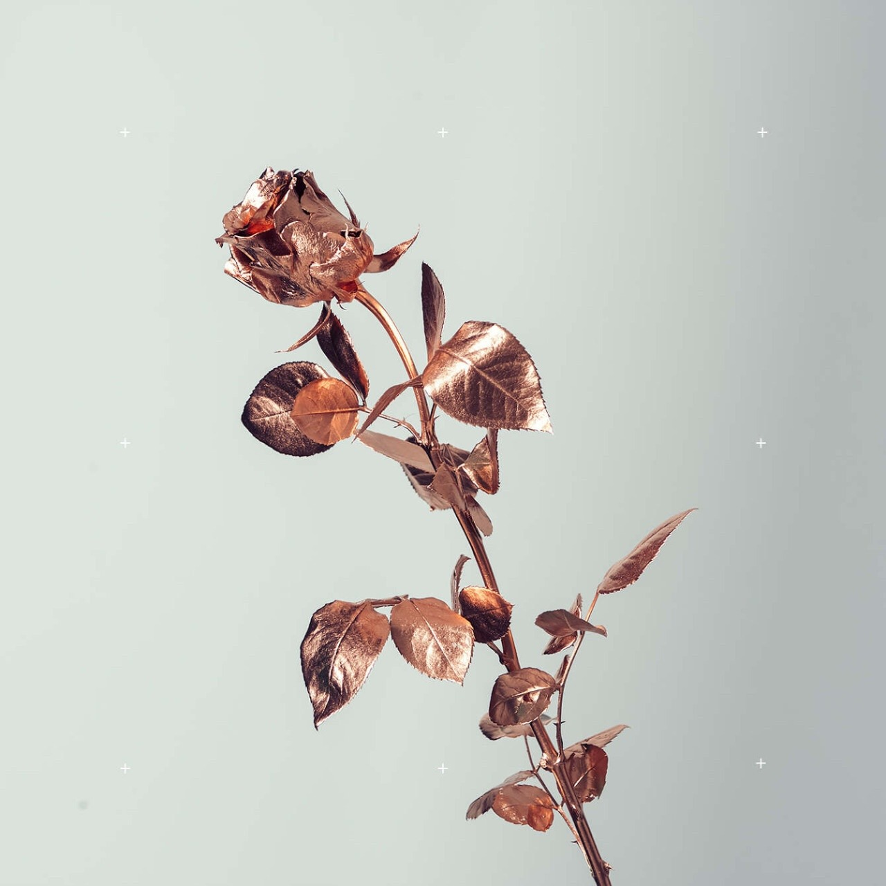 12+ Coolest Rose Gold Simple Aesthetic Wallpaper