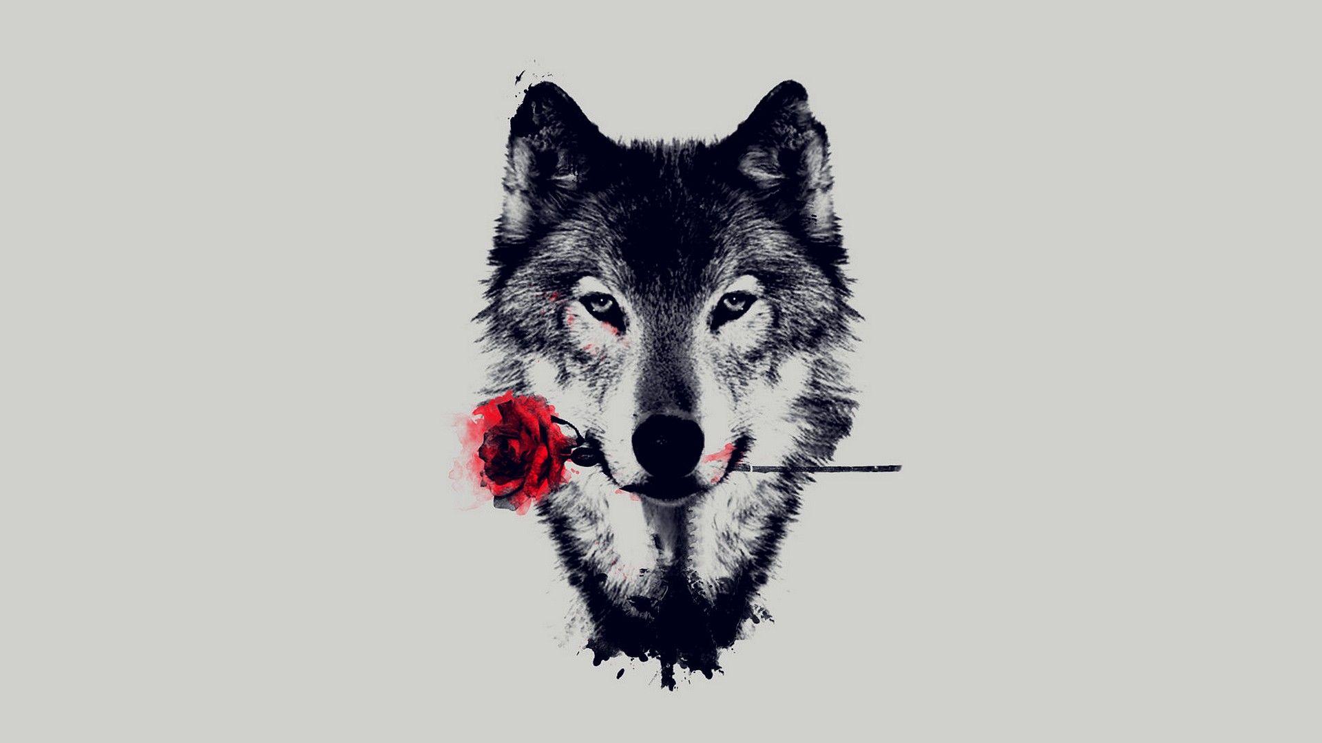 Cool Wolf Hd Wallpaper Wolf Holding A Rose 1920x1080 Wallpaper Teahub Io