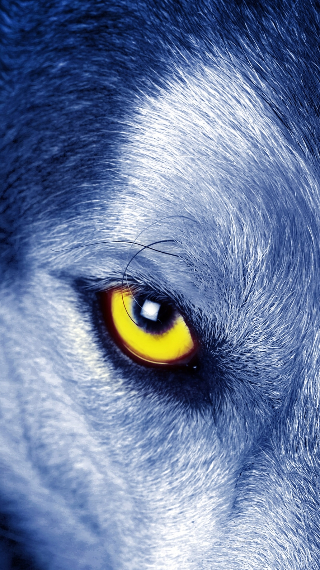 Wolf Eyes Wallpaper Iphone 1080x1920 Wallpaper Teahub Io