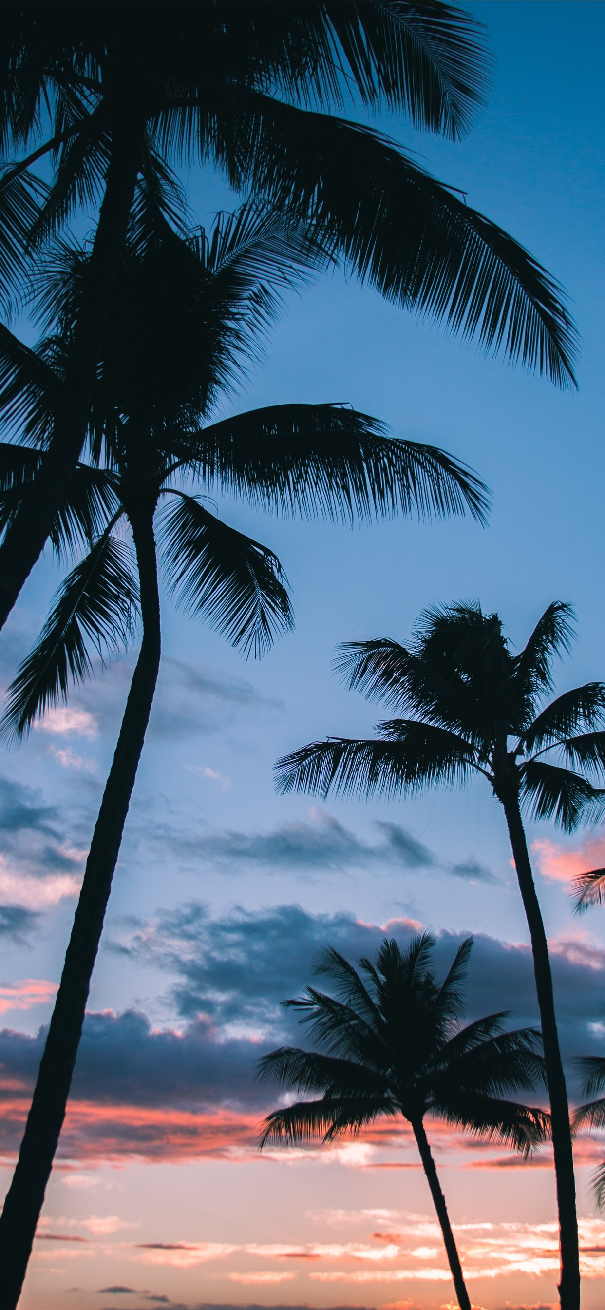 Palm Tree Wallpaper Iphone - HD Wallpaper