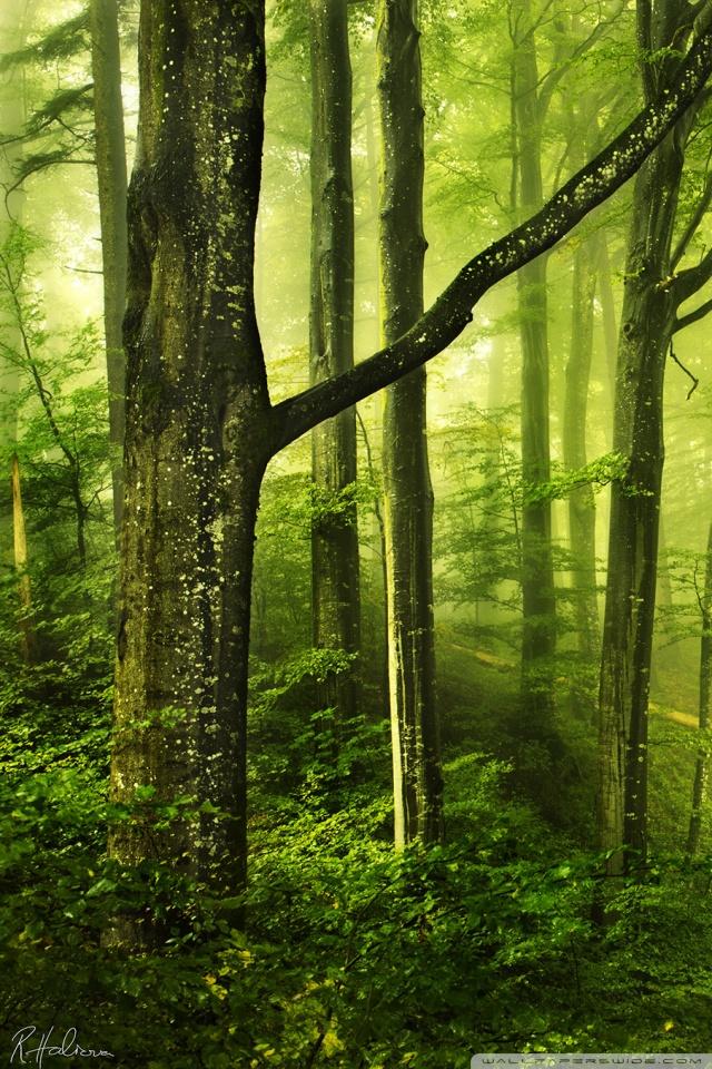 Forest Wallpaper 4k Phone - HD Wallpaper