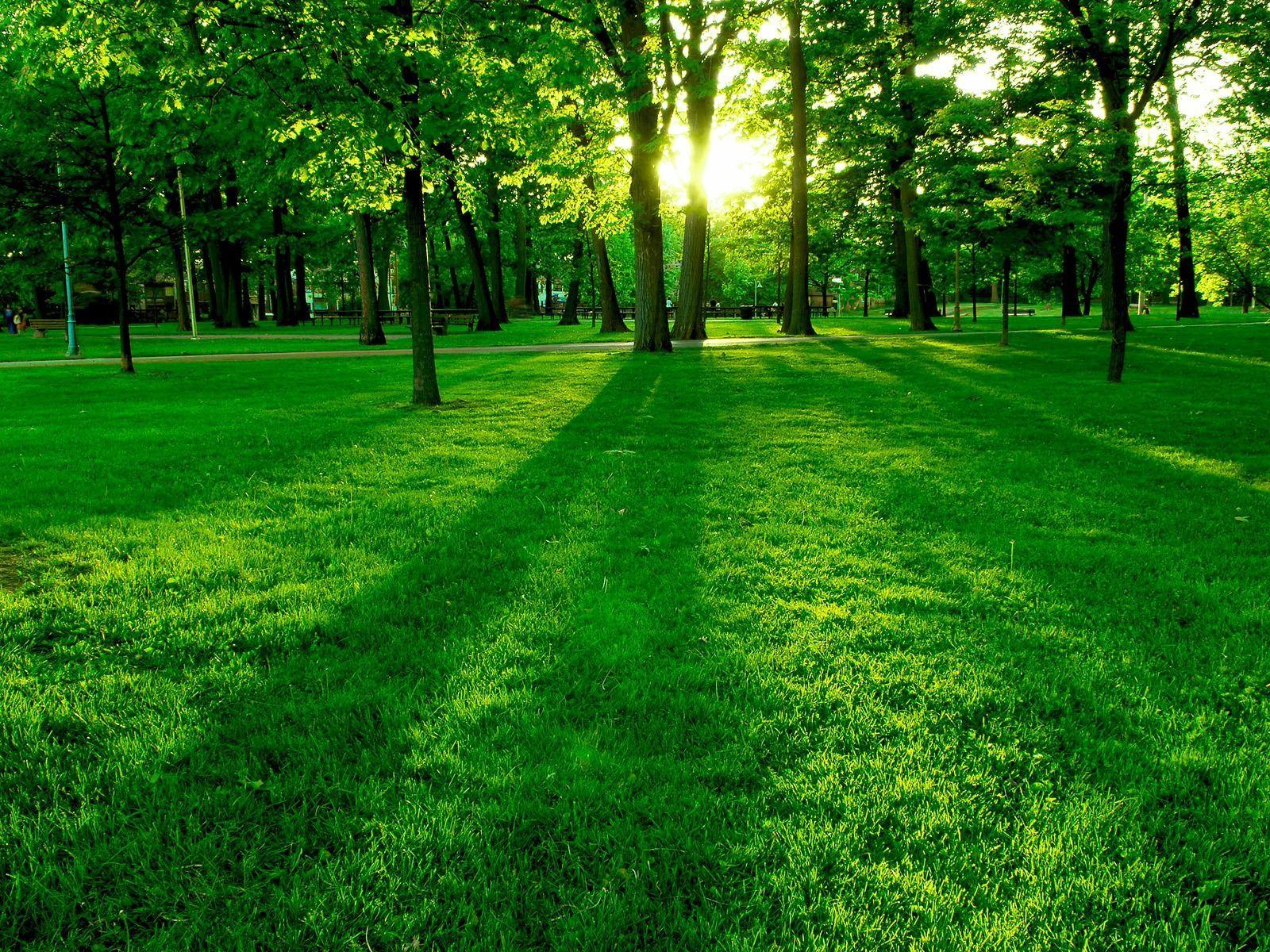 55 Green Nature Wallpapers - Green Nature - HD Wallpaper