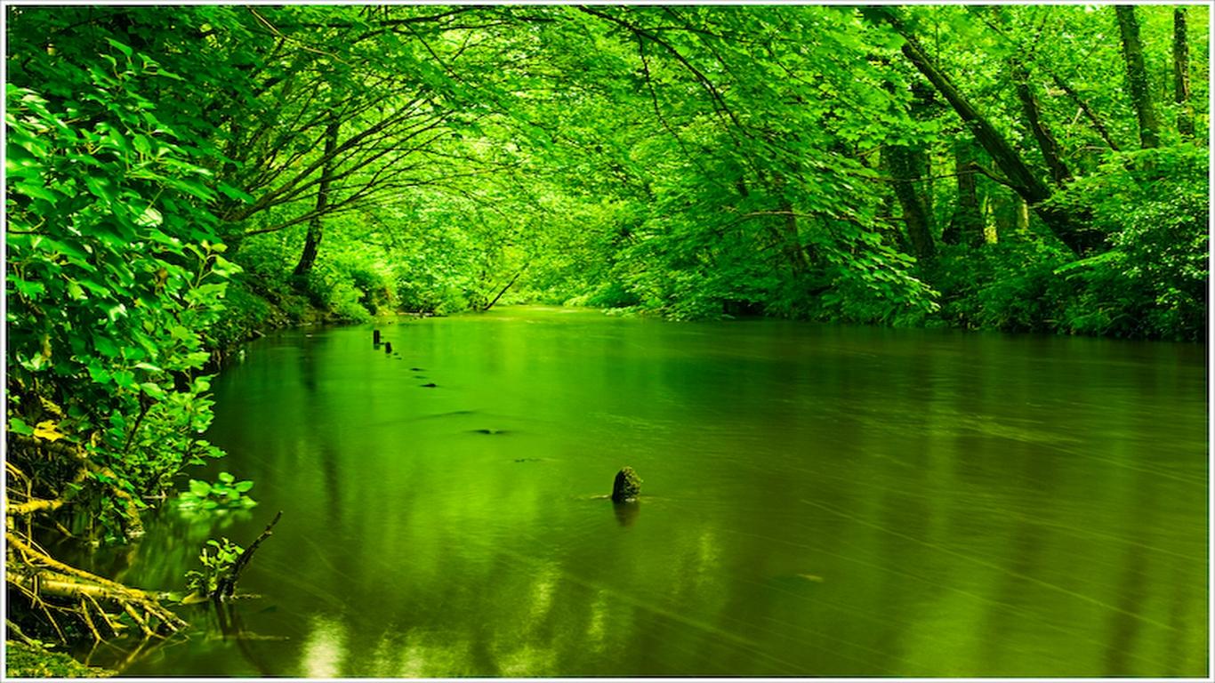 Green Stream Nature Wallpaper - Green Nature Desktop Background - HD Wallpaper