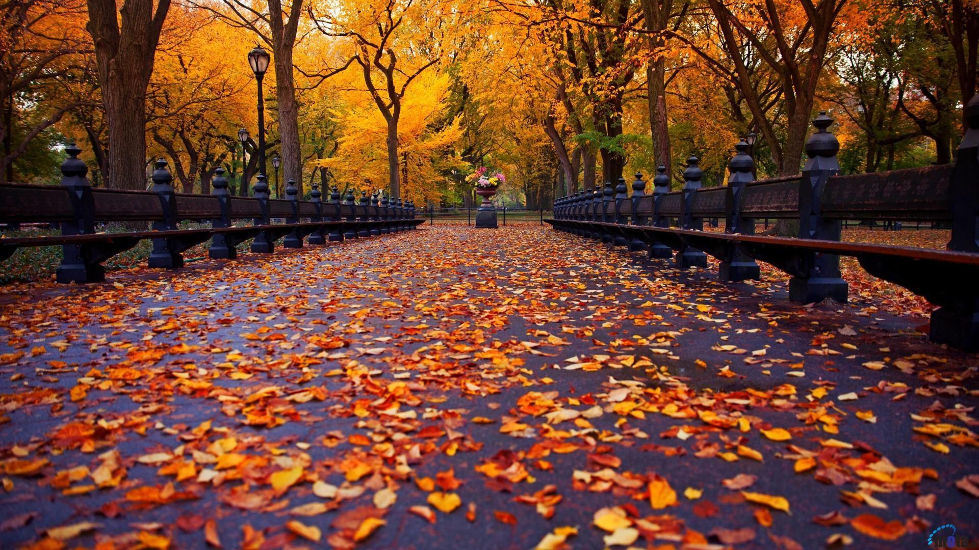 1920x1080, Fhdq Background » Background Id - New York Autumn - HD Wallpaper