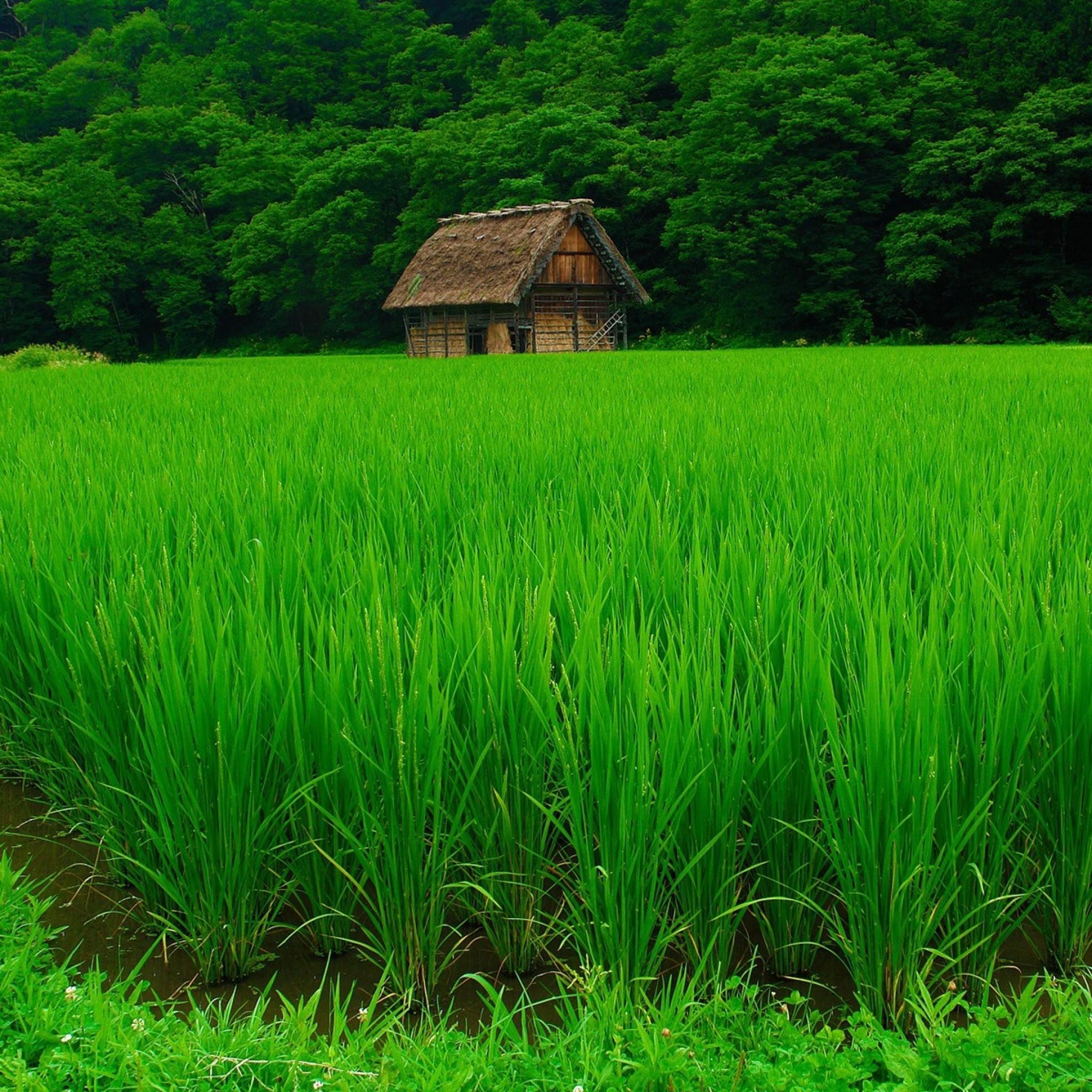 Grass Lawn Beautiful Summer - Green Nature - HD Wallpaper