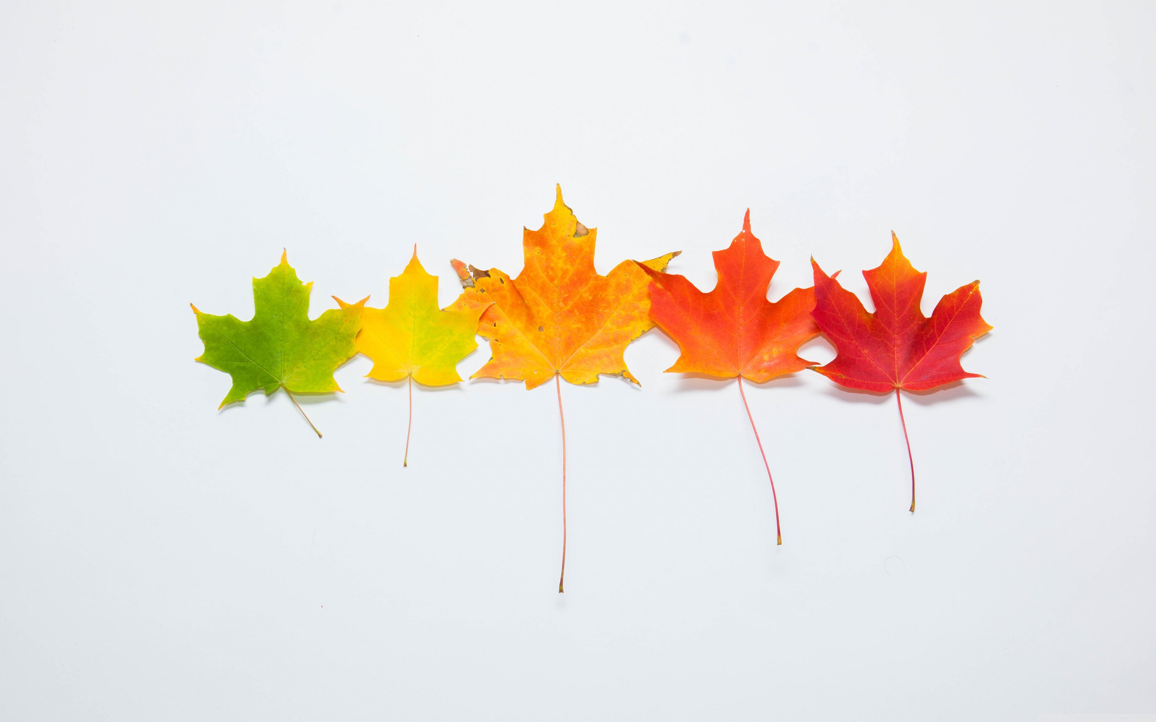 Simple Fall Desktop Backgrounds - HD Wallpaper