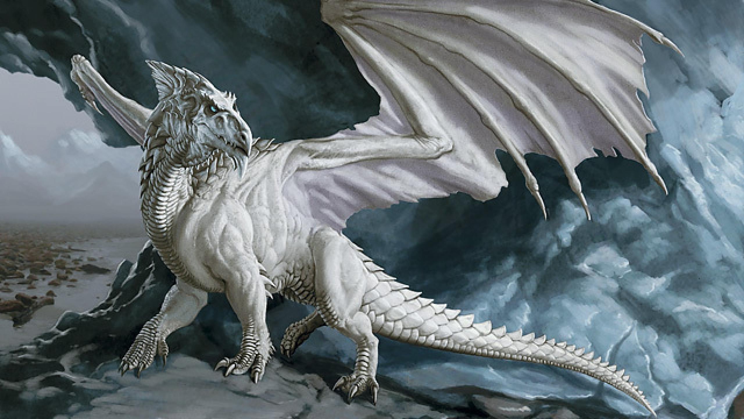 White Dragon Wallpaper Hd 2560x1440 Wallpaper Teahub Io