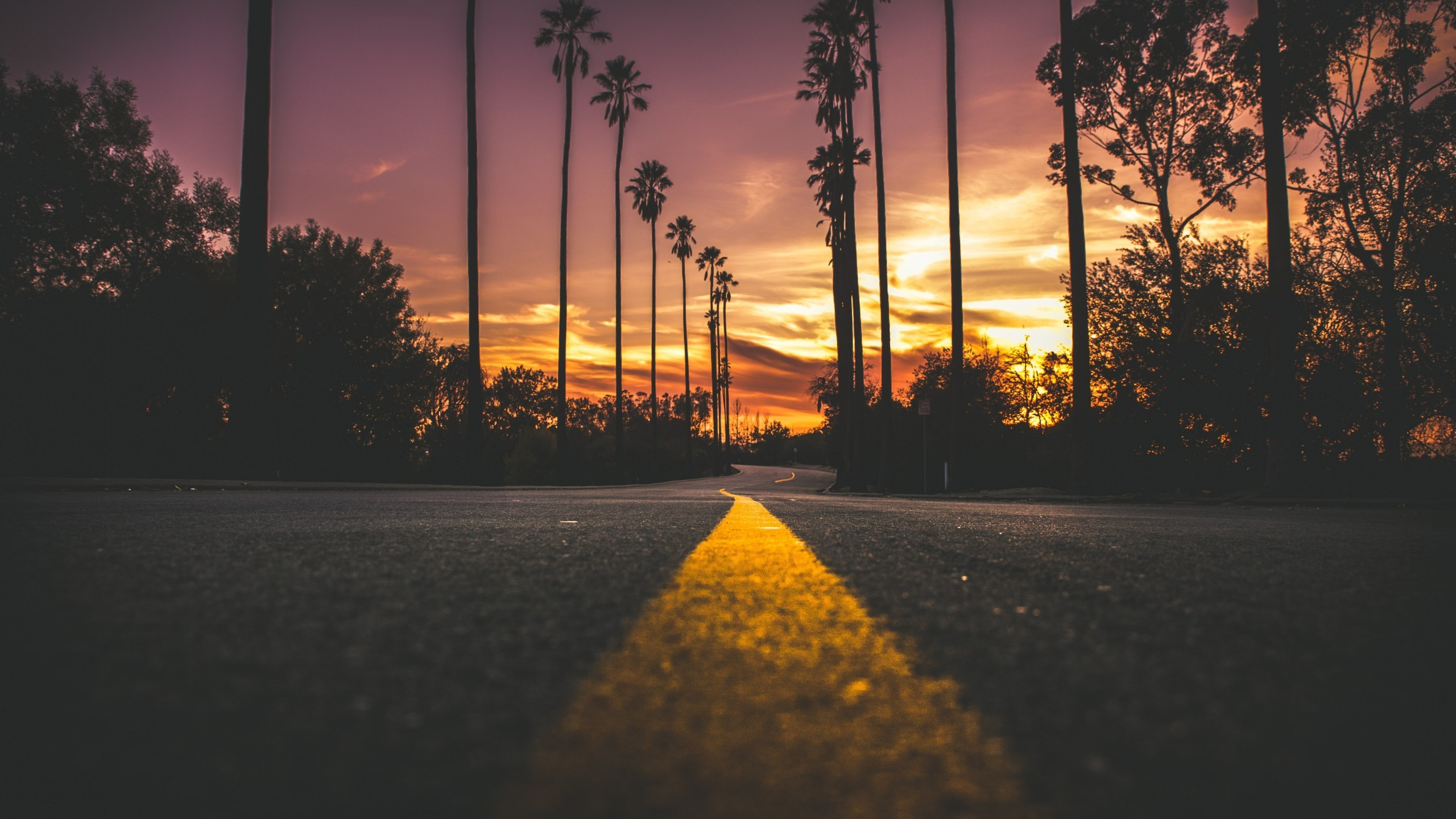 Sunset Dawn Road Scenic Trees Travel Travelling Wallpaper For Laptop Hd 2560x1440 Wallpaper Teahub Io