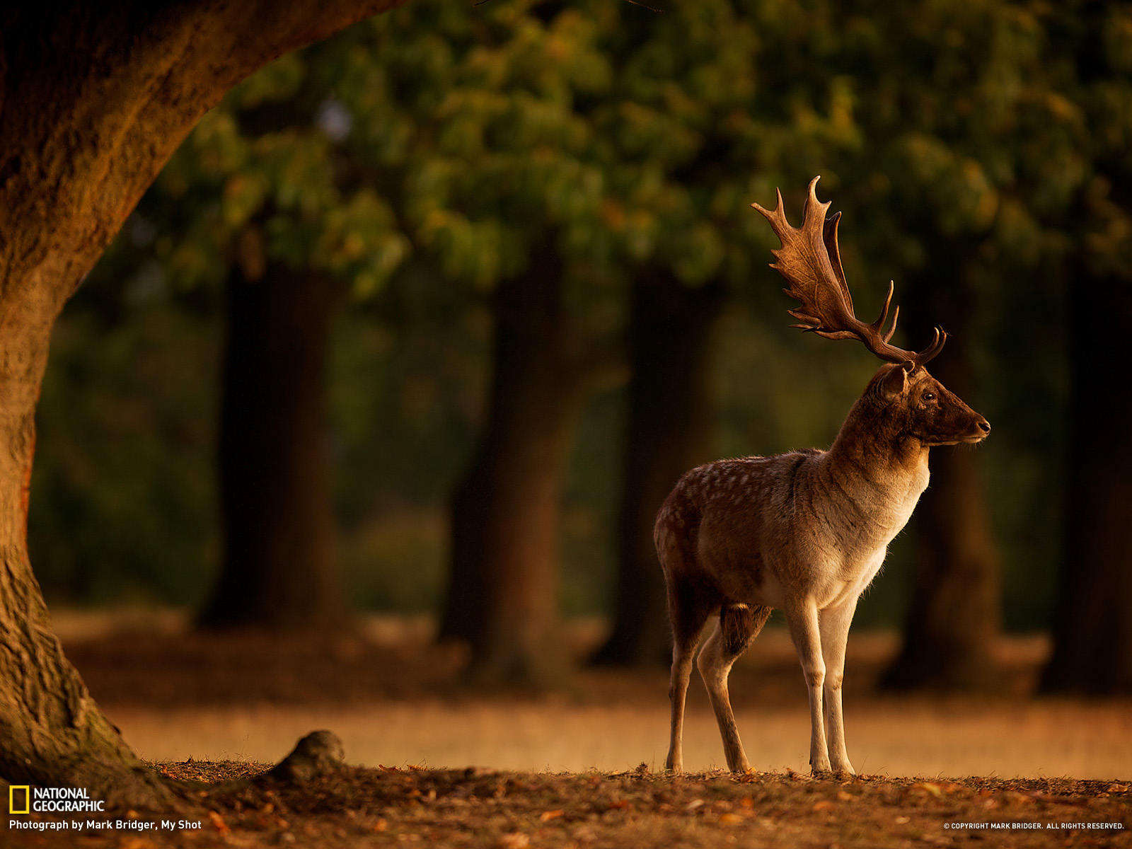 Best Ideas About Deer Wallpaper On Pinterest Cute Backgrounds National Geographic Nature Animals 1600x1200 Wallpaper Teahub Io