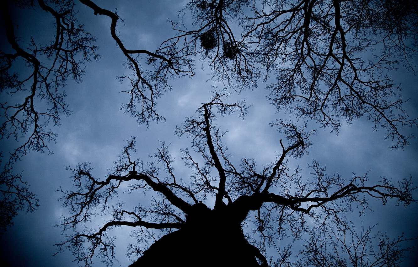 Photo Wallpaper Sky, Nature, Night, Tree, Branches, - Bottom View Of Trees Night - HD Wallpaper