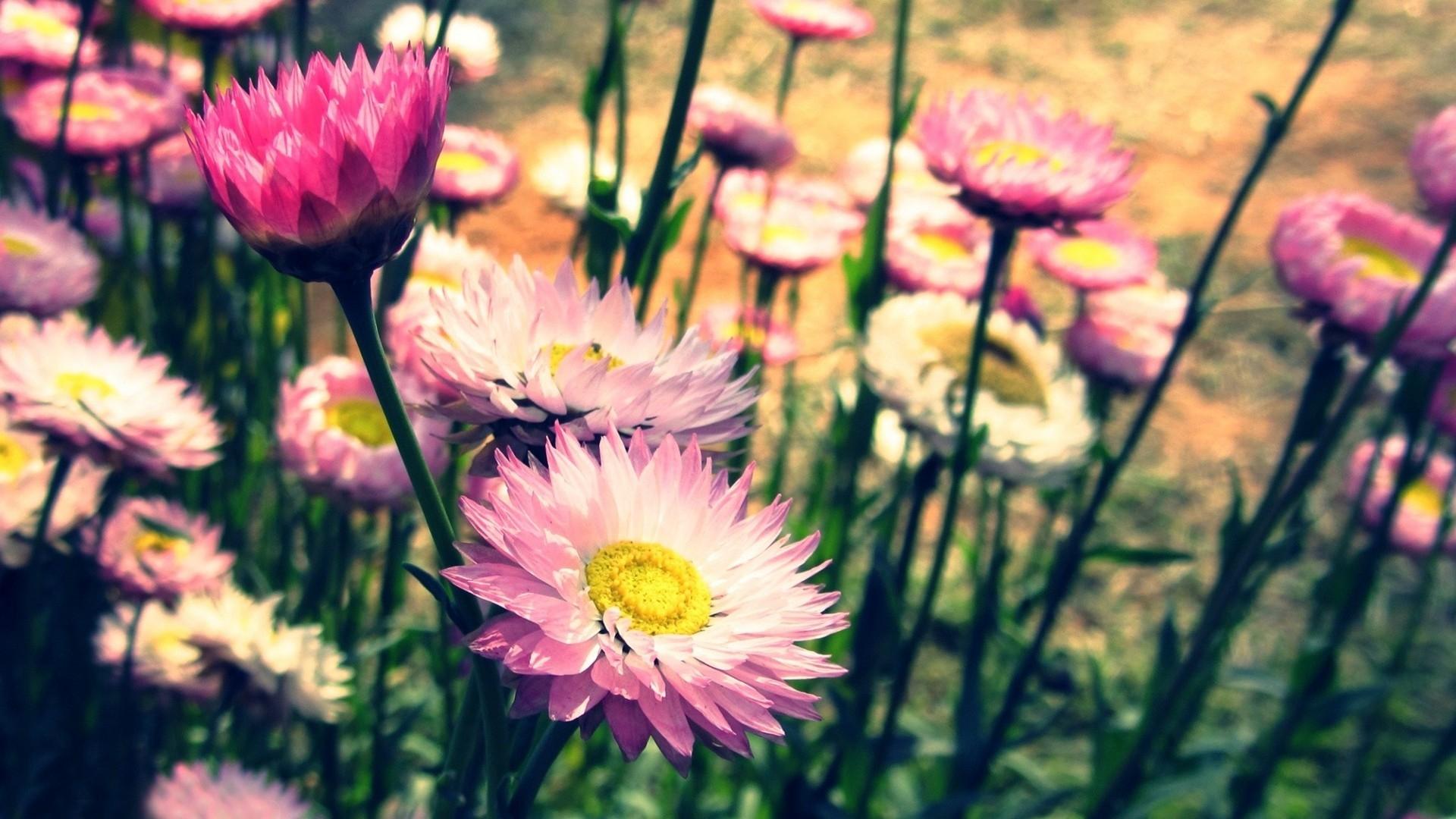 Desktop Backgrounds Flowers Vintage - HD Wallpaper
