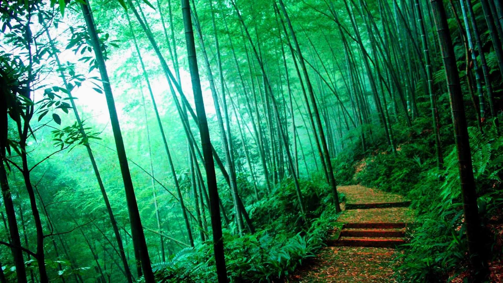 Bamboo - Wallpaper - - Bamboo Forest Wallpaper Hd - HD Wallpaper